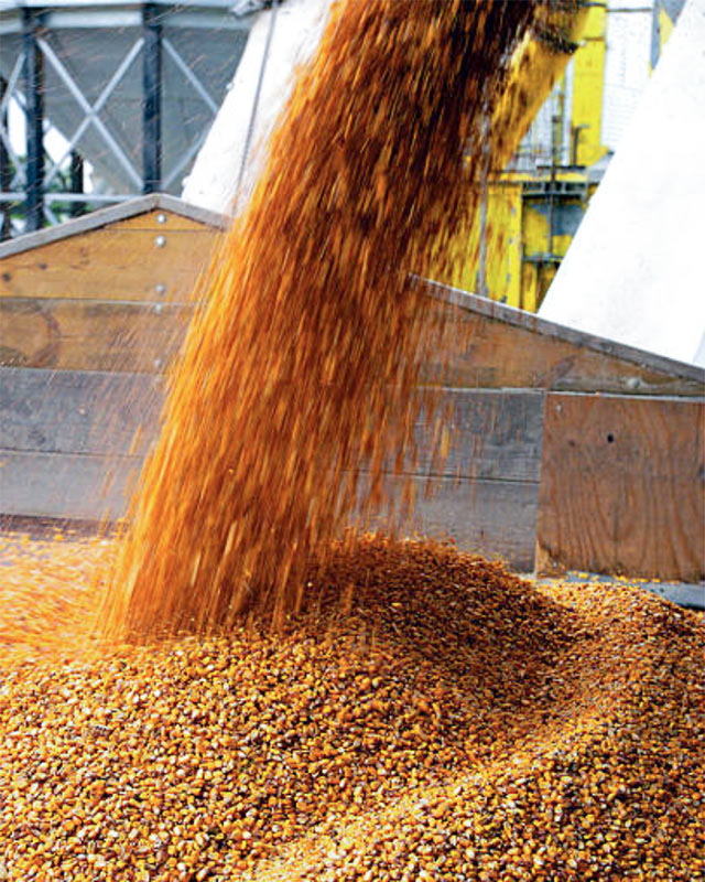Pouring bulk commodity corn